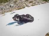 Even Sky got into rolling down the snow patches