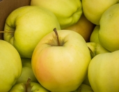 Ginger gold apples - one of my favorites