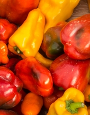 Beautiful peppers