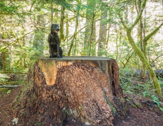 I was so pleased to see that Sky's big stump didn't burn in last summer's fire at Newhalem