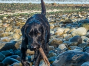 A dog and her stick