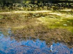 Lake Pondilla