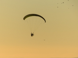 This noisy parachute with a lawnmower engine was quite the disturbance. All the birds flew.