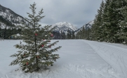 Christmas tree along the ski trail
