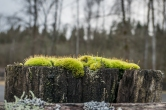 Moss on a fencepost