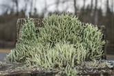 Lichen on a fencepost