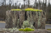 Moss and lichen on a fencepost