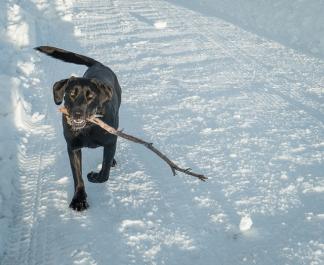 I got a stick.
