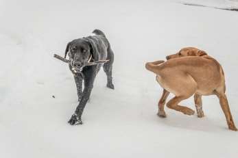 I told you. My stick.