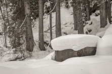Cedar trunks and rock