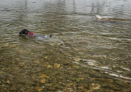 February swim