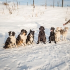 Seven dogs all in a row