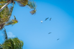 We were welcomed by Magnificent Frigatebirds and Red-footed Boobys