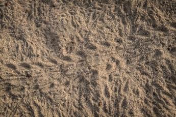 Hermit crab tracks