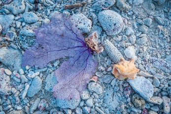 Fan coral washed up on the beach