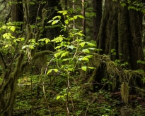 A ray of sunlight in the dark forest