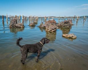 Luna enjoyed the water