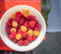 Raspberries! Gems.