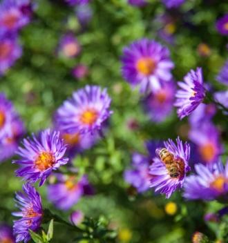 Flowers and a honeybee at TwispWorks