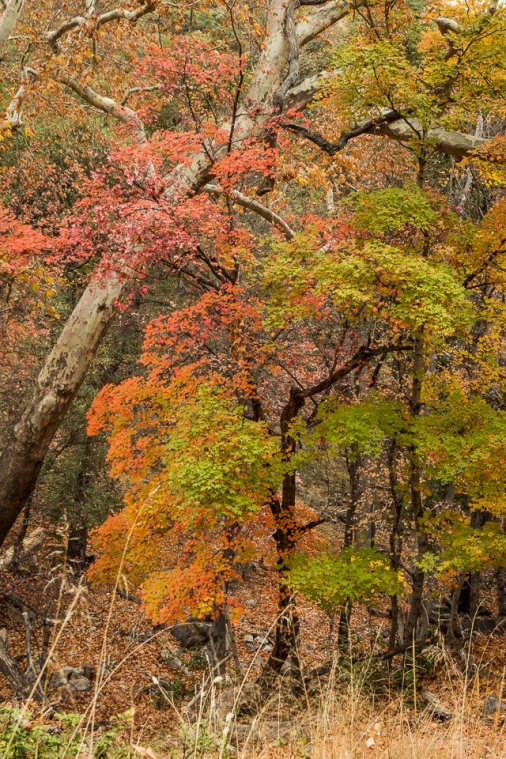 Folks at the visitor center said the fall colors were mostly finished. They must have been amazing before we arrived!