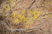 And lichen