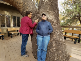 Tree huggers at the Arizona Folklore Preserve
