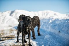 One dog photo