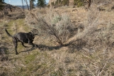 Sky wrestled with a sagebrush. She lost