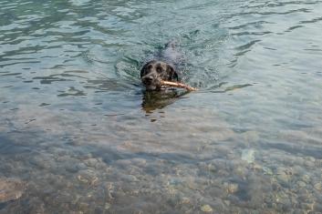 She swam