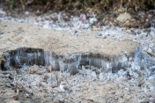 Ice crystals pushed up through the packed dirt of the shaded part of the trail.