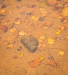 See the tadpole?