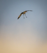 I love the way cranes come in for a landing