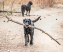 Look, I've got a stick!