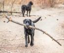 Look, I've got a stick!