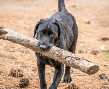 I got a heavier stick!