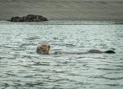 Sea otters are pretty adorable