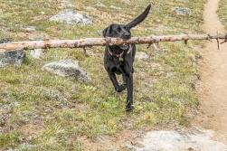 Oh look, Sky got a stick.