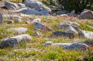 So many rocks