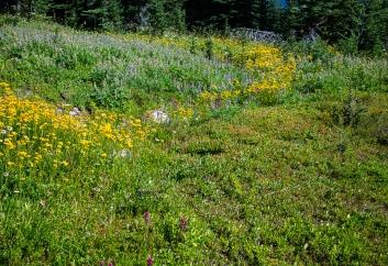 Streams of wildflowers
