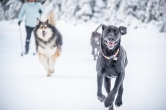 That big dog trying to catch Sky is a husky/malamute/sheltie mix.
