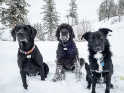 Black dog club