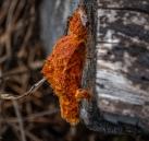Some odd fungus