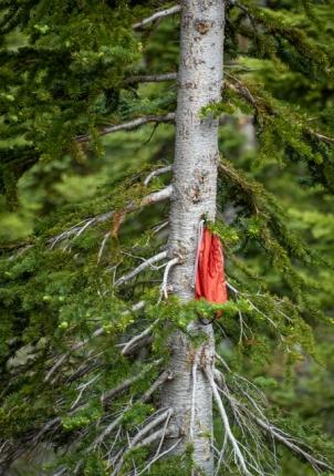 Strange things in trees